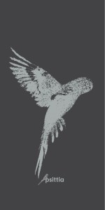 Psittia Wellensittich im Flug hell auf dunkel wallpaper screensaver