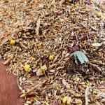 Artgerechtes Wellensittichfutter mit einem hohen Anteil an Grassamen