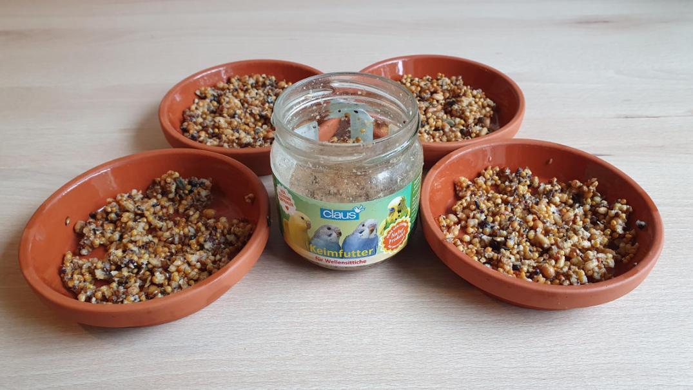 Fertiges Keimfutter aus dem Glas