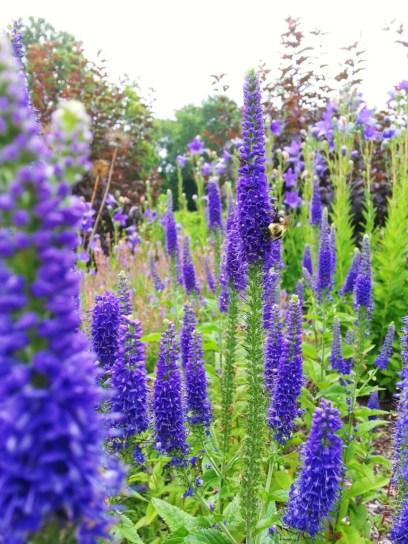 garden-flower-beauty-shots-eg-1