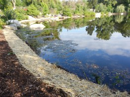 shoreline-planting-project-rotary-district-grant-2016-4
