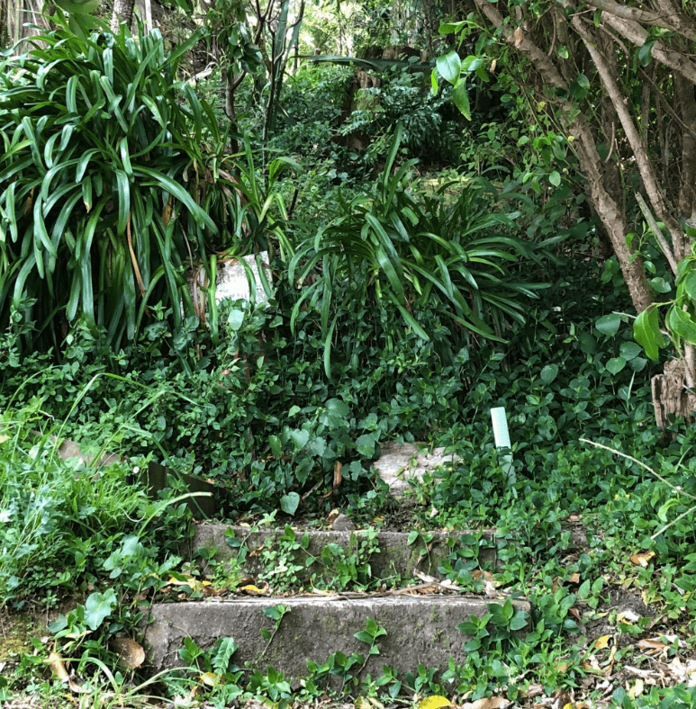 Screen Shot 2020-01-01 at 3.37.03 PM