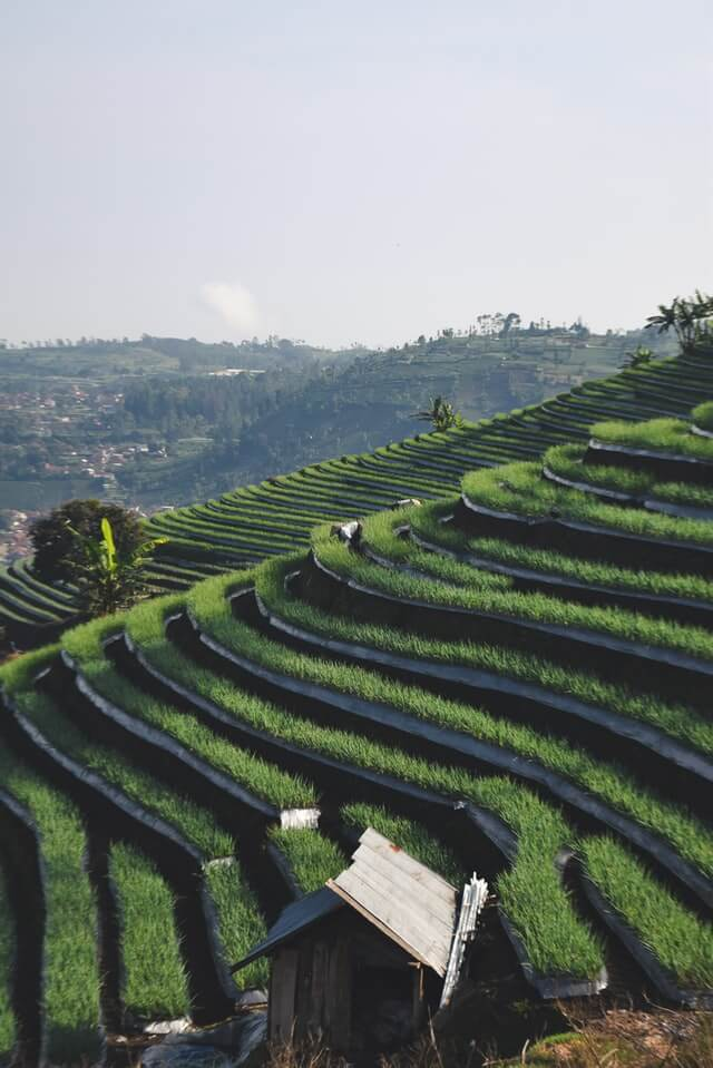 Rice Terraces, Majalengka