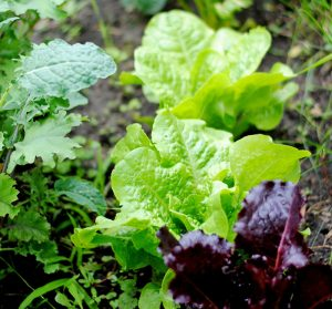 3 Ways To Eat Local and Seasonally This Summer