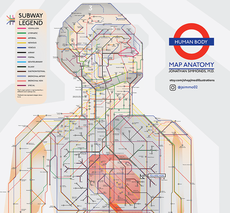 Human  body as a subway map