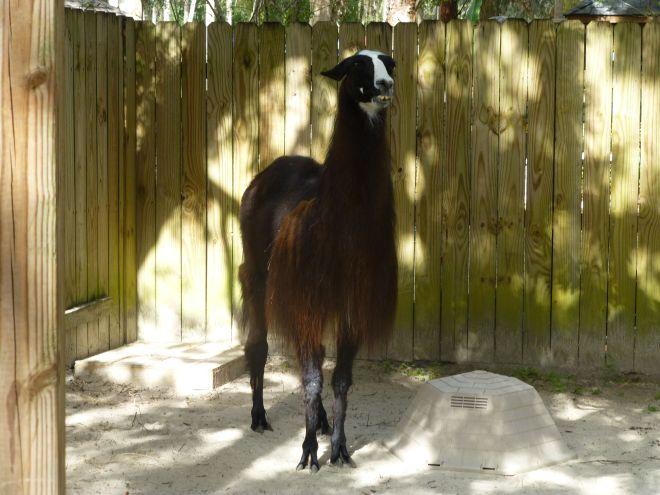 This llama hopes you had a nice day!