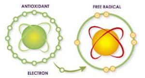 Oxidative Stress Assessment