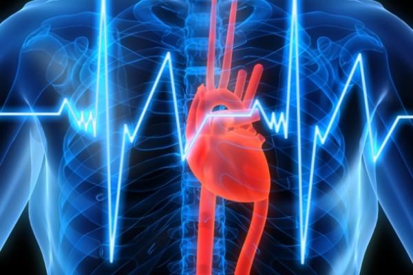 cardiovascular health risk