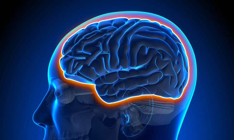 The Blood-Brain Barrier and Brain Health | El Paso, TX Chiropractor