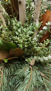 boxwood and magnolia leaves
