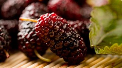 Amazing Benefits Of Shahtoot (Mulberry)