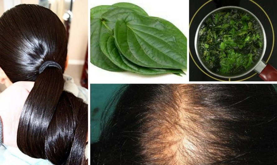Grow Thick Hair Naturally with Betel Leaves(Paan ka Patta)