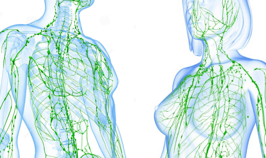 Boost Your Lymphatic System for Improved Health & Vitality