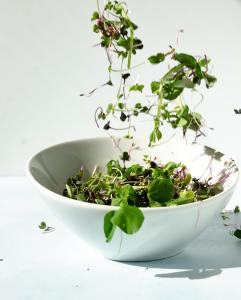 Microgreens Daily Dose of Nutrition to Boost Immunity