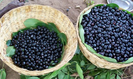 Black Plums or Jamun health benefits