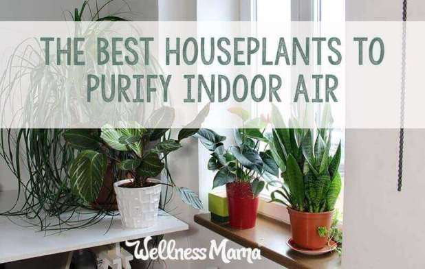 The best houseplants to purify indoor air