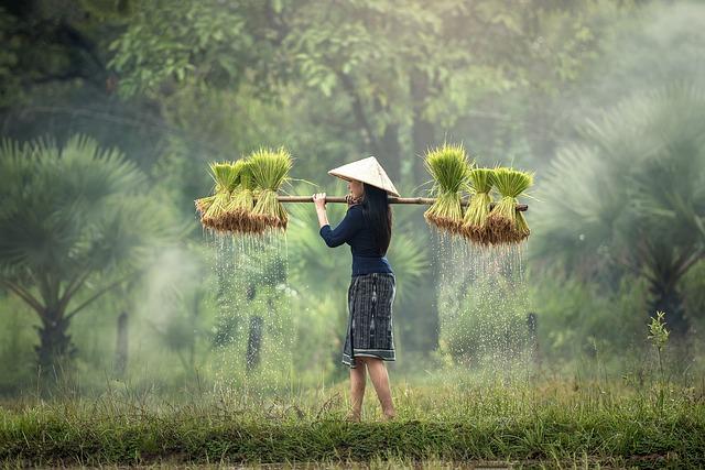 harvesting-1822578_640