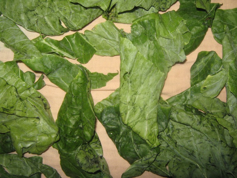 Cauliflower leaves recipe - washed leaves