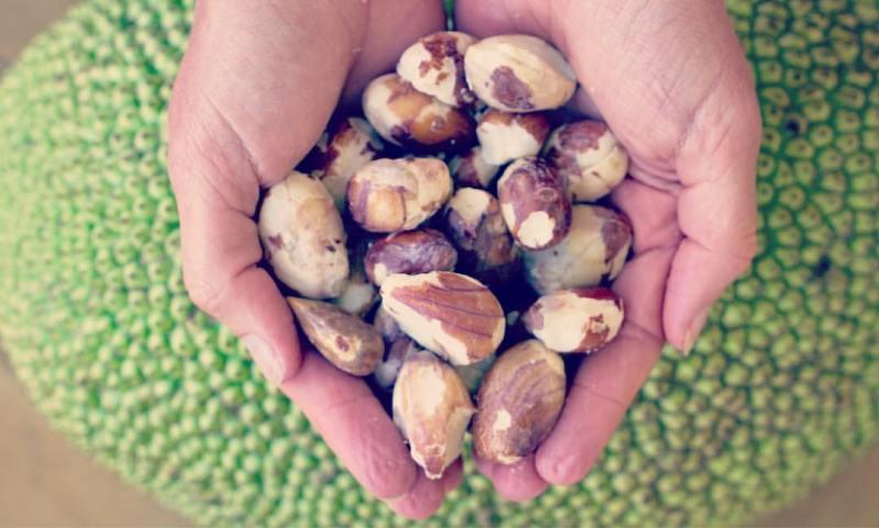 How to preserve jackfruit seeds?2