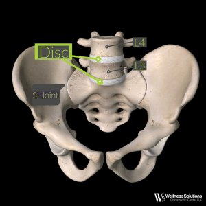Anatomy of the Pelvis
