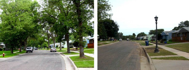 Emerald-Ash-Borer-Before-After