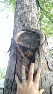 Preventative maintenance Trees Topeka Emporia