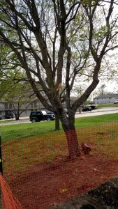 construction damage tree preservation