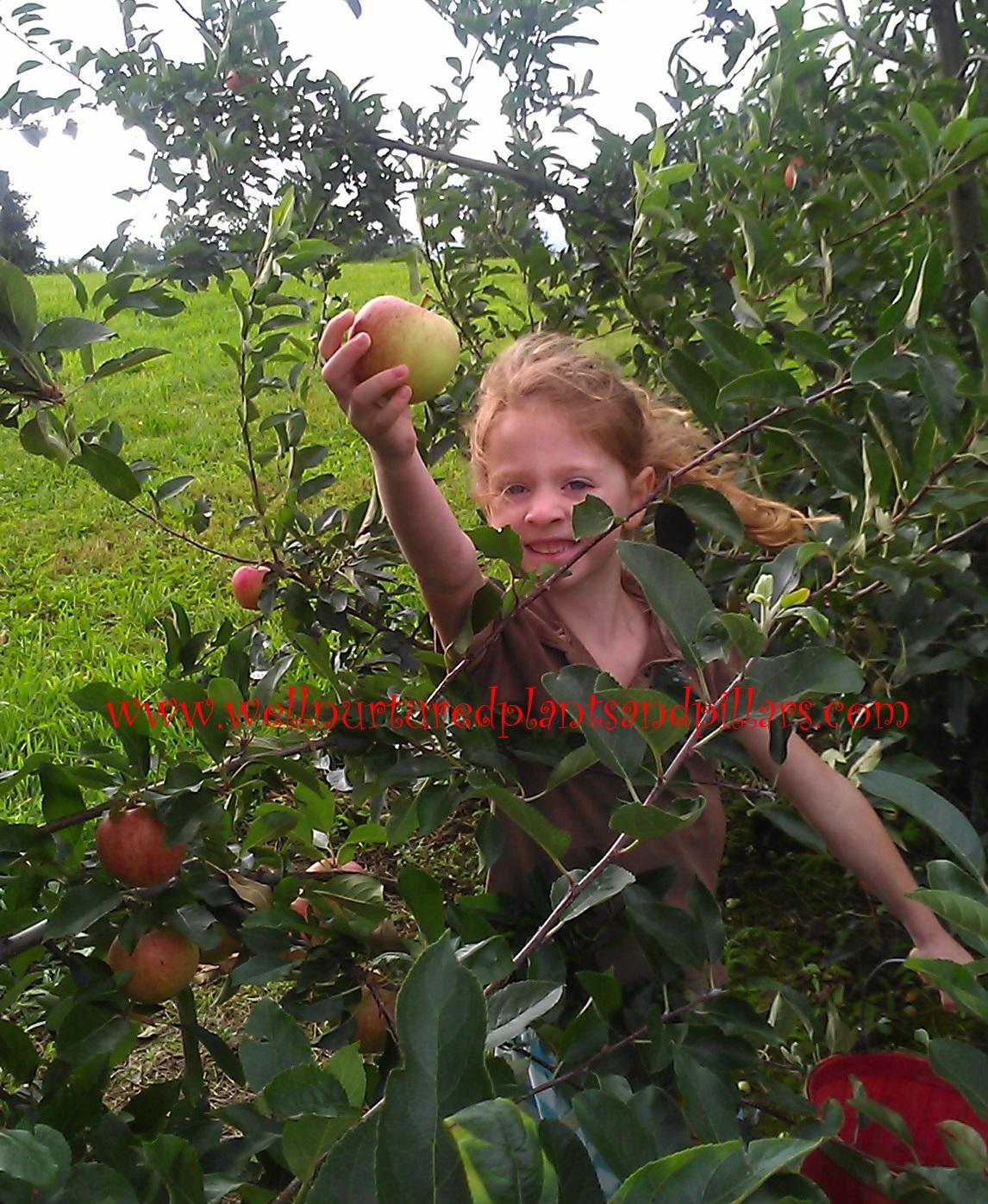 Freebie Friday Apple Orchard Field Trip Printable Pack