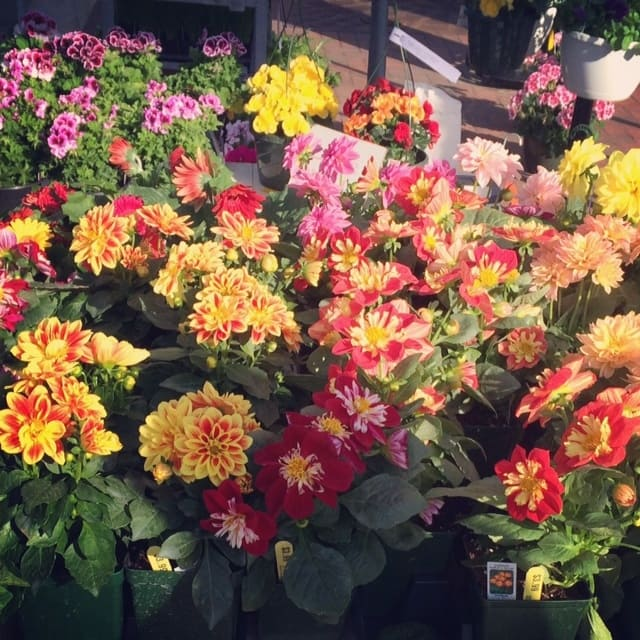 Farmers Market Flower Beauty