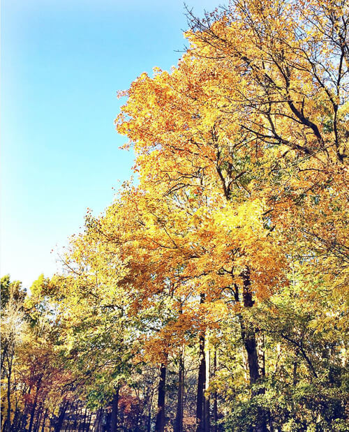 Things to be thankful for: Fall colors