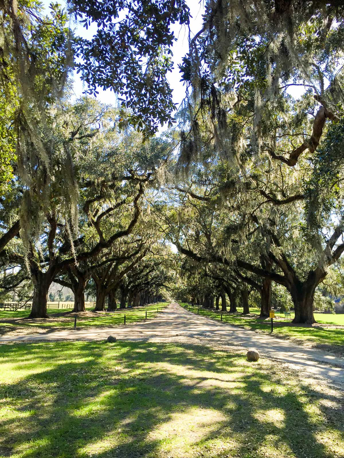Lane of Oaks at Boone Hall plantation. One of the best things to do in Charleston, South Carolina!