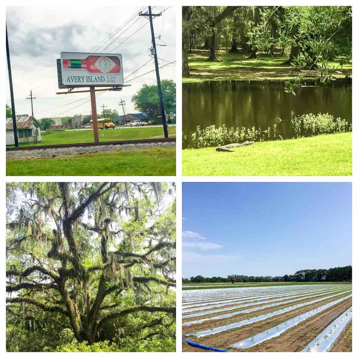 Avery Island, Louisiana, home to the Tabasco factory and Tabasco pepper fields, plus a recipe for grilled pineapple shrimp skewers. @wellplated