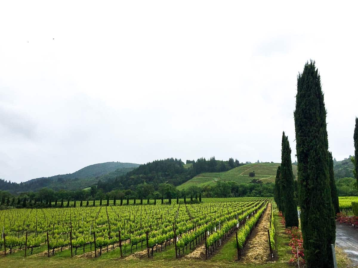Gardens at one of the best Sonoma wineries, Ferrari-Carano