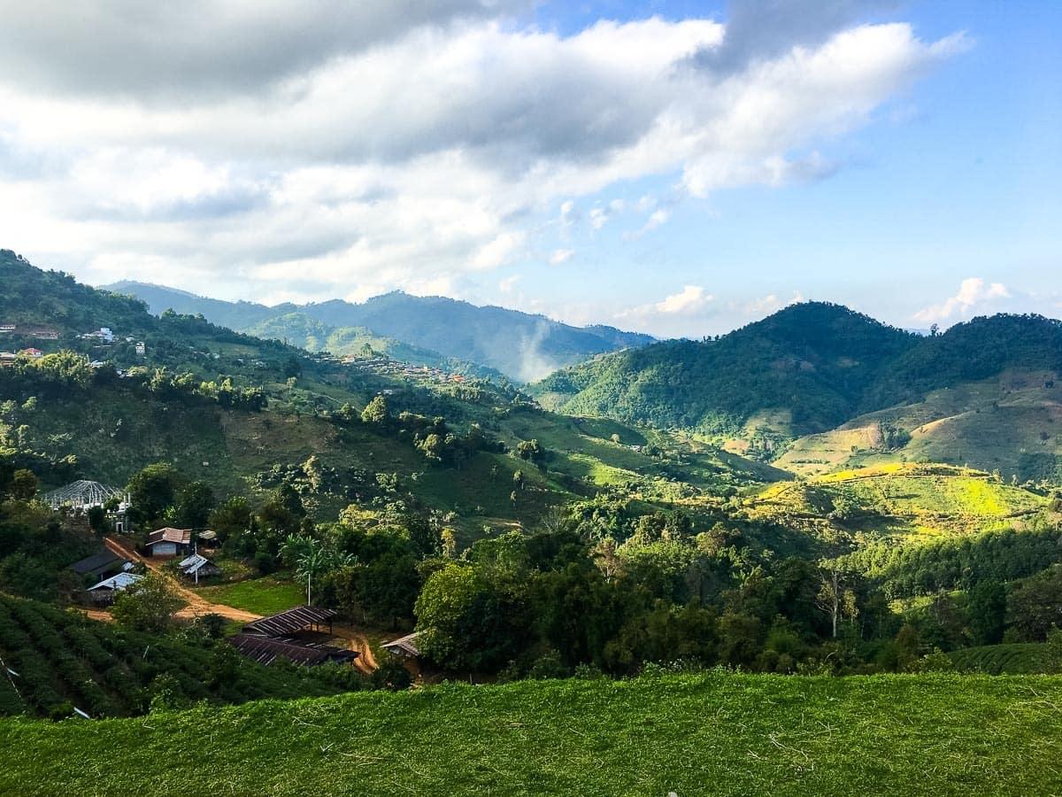 Tea fields of northern Thailand