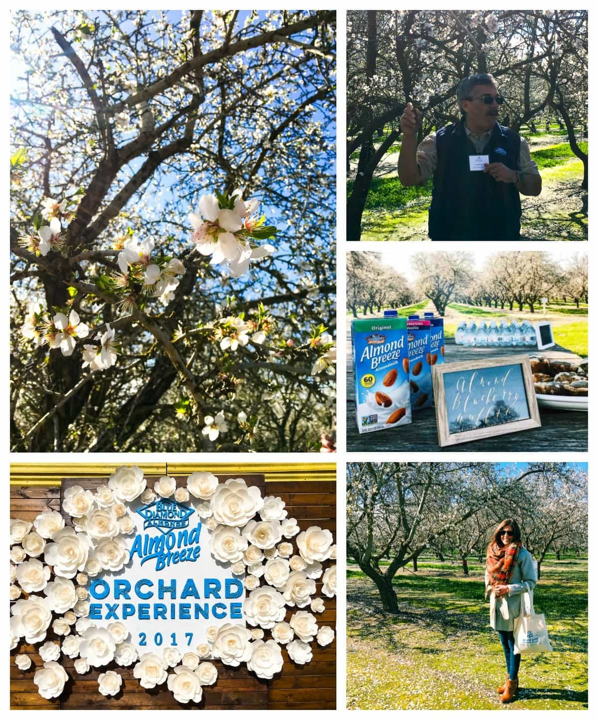 Almond Orchard tour and a recipe for mashed cauliflower