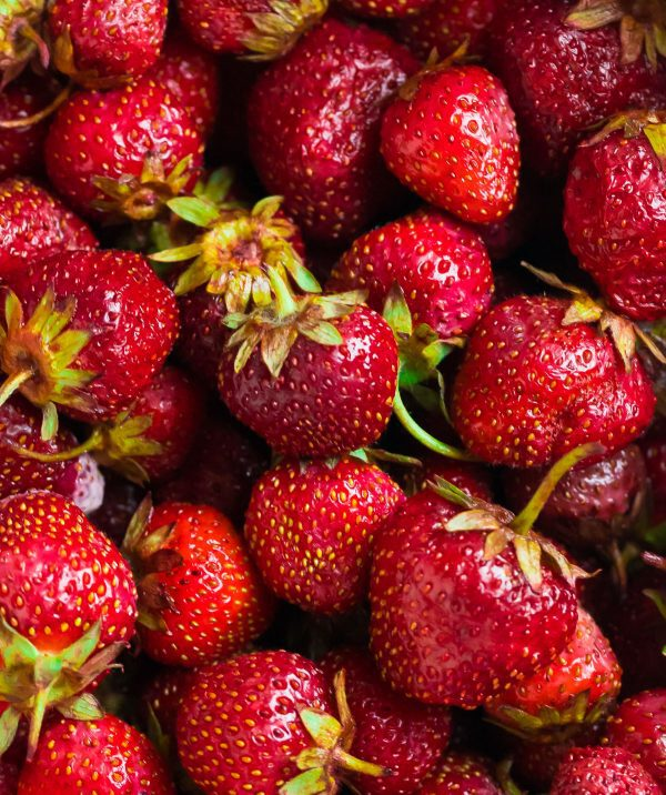 Fresh strawberries to be used in a healthy Strawberry Smoothie made with yogurt