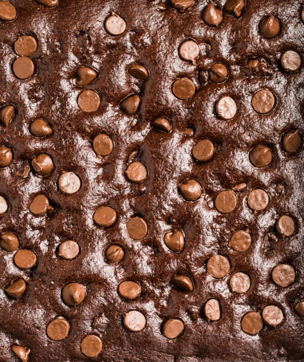 A baked chocolate dessert studded with chocolate chips