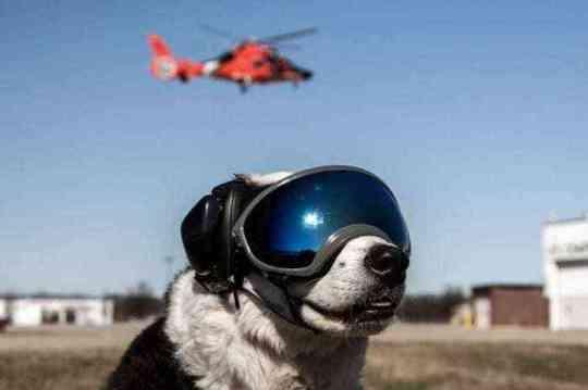 Piper the Aviation Bird Dog