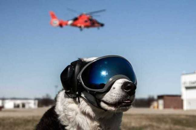 Piper the Aviation Bird Dog