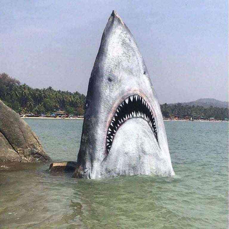 Artist converts beach rock into a great white shark #art #nature #creativity