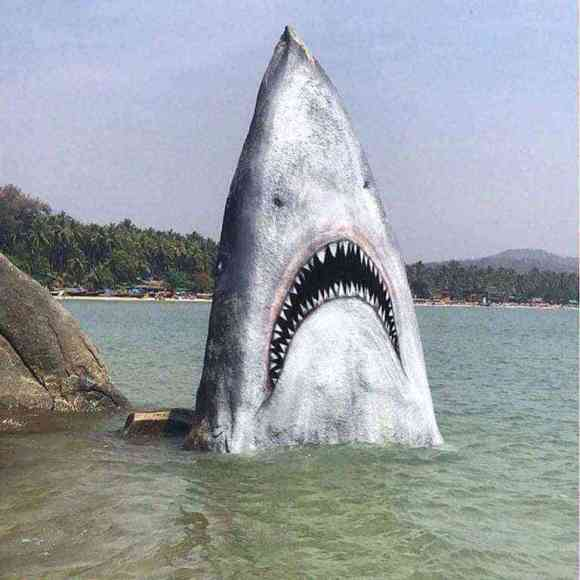 Artist converts beach rock into a great white shark #art #nature #creativity