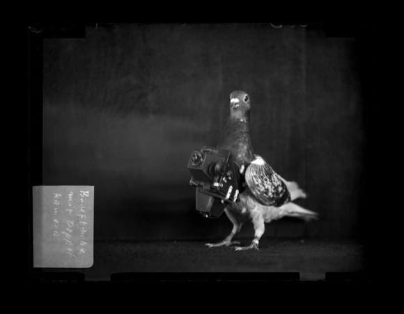 The pigeon camera, a precursor to the drone