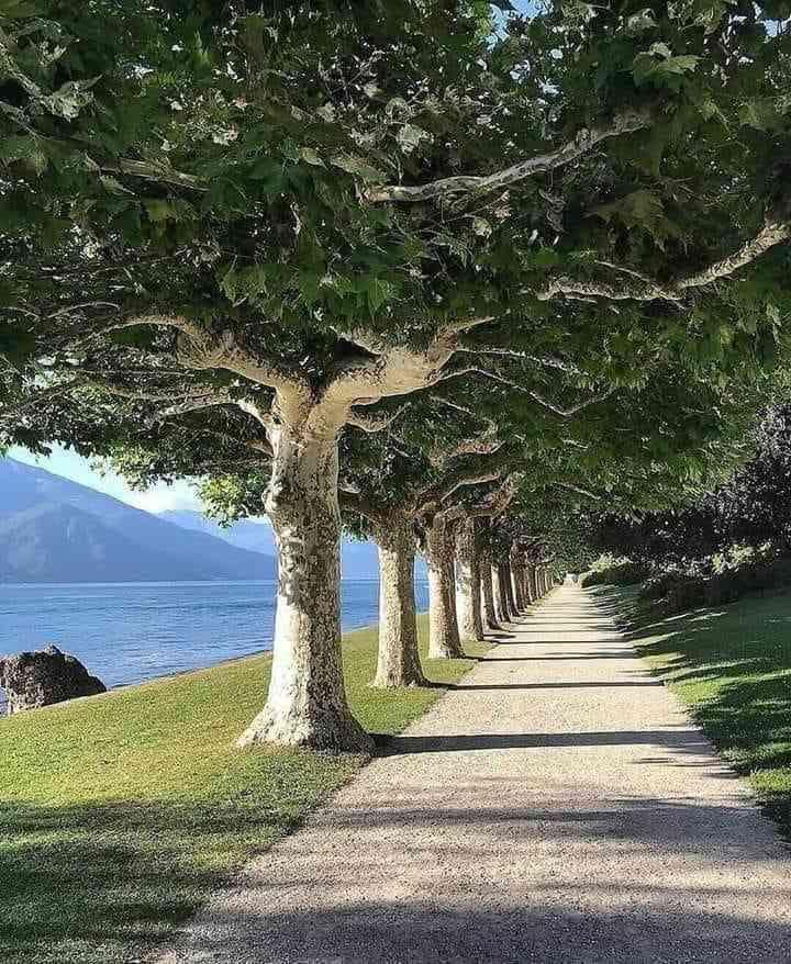 Prescribing a walk in nature