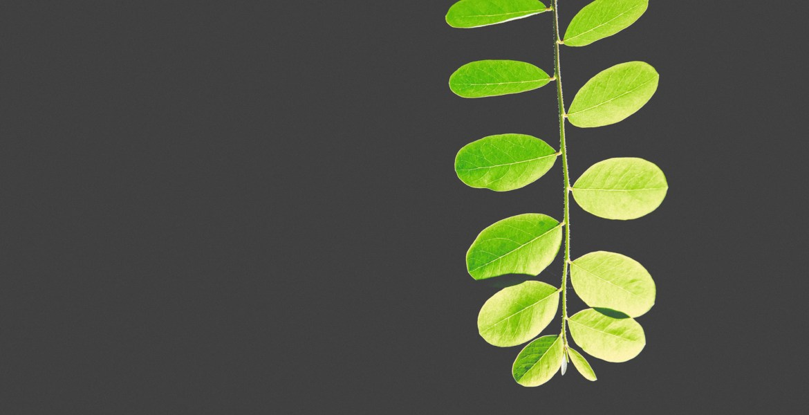 Moringa is a huge superfood that you should know about.
