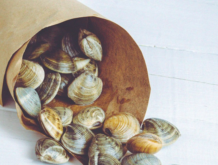 Clams are an energy powerhouse with essential nutrients.