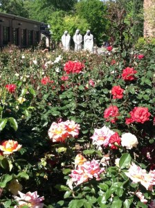 Rose Garden at Chico State, JHD