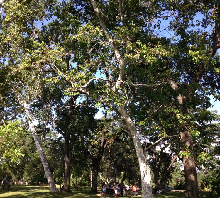 Tu Bishvat: New Year of the Tree(s)