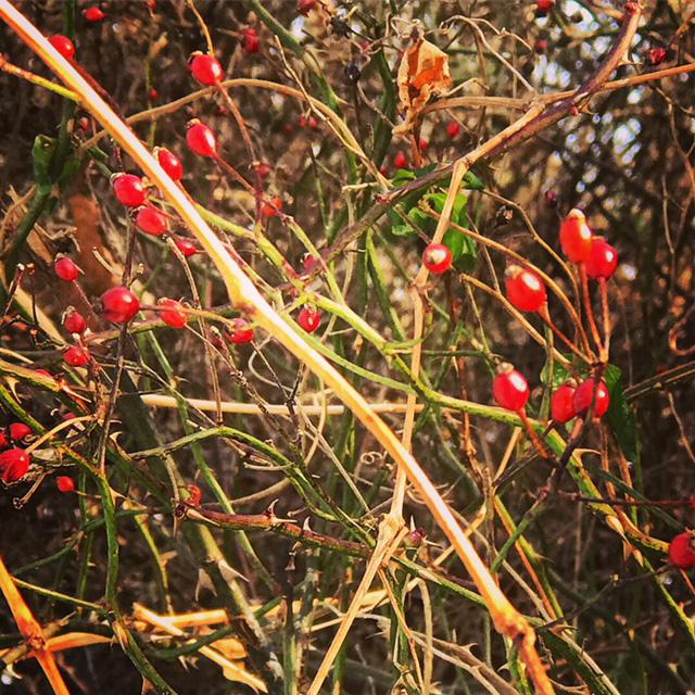 Thorns 9