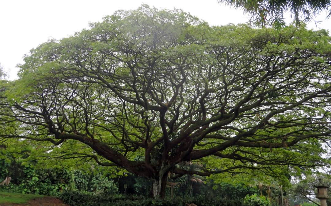 Torah Study: The Tree in the Garden