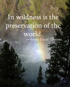 in-wildness-is-the-preservation-of-the-world-henry-david-thoreau-camping-quotes